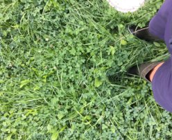 Météo de l'herbe