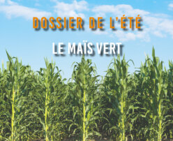Dossier de l'été - Le Maïs vert