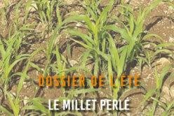 Dossier de l'été - Le millet perlé