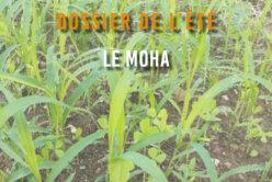 Dossier de l'été - Le Moha